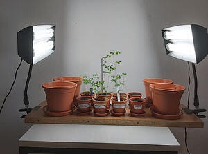 Table set-up consisting of plants which are growing under UV light