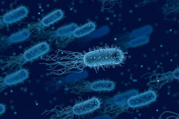 Antibiotics and immunesystem fighting superbugs