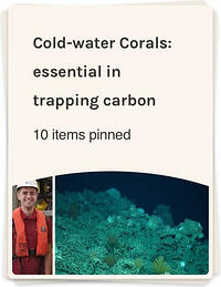 Cold-water corals- essential in trapping carbon. But what about climate change?