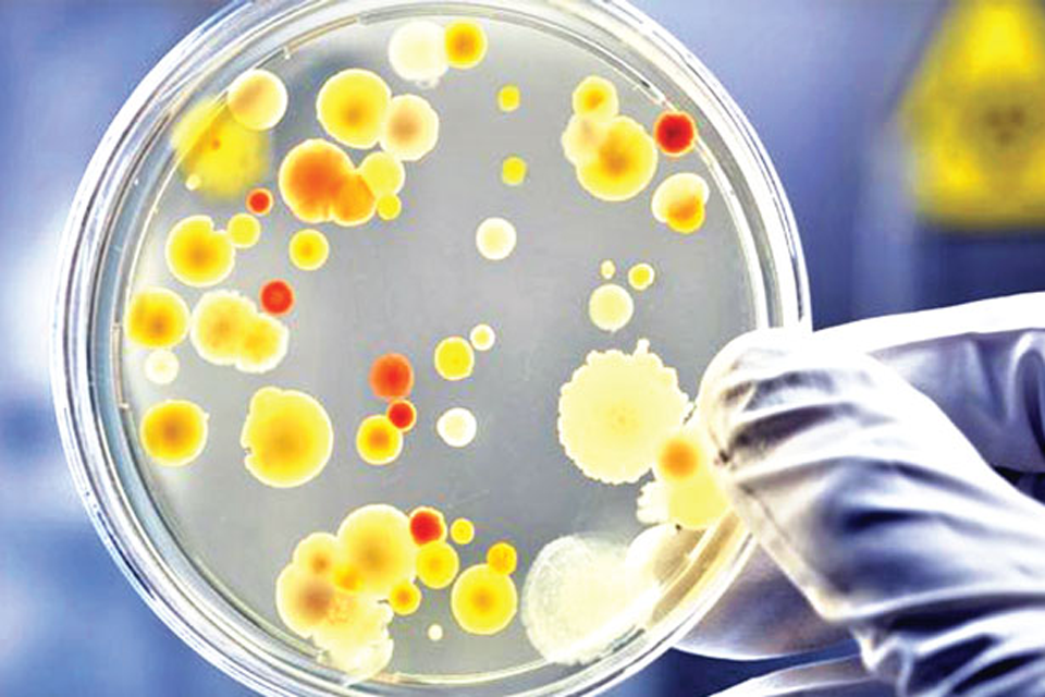 Bacteria are a new line of attack against cancer