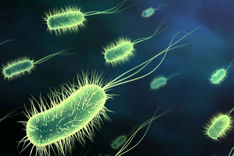 There are microbes that could power small electric devices