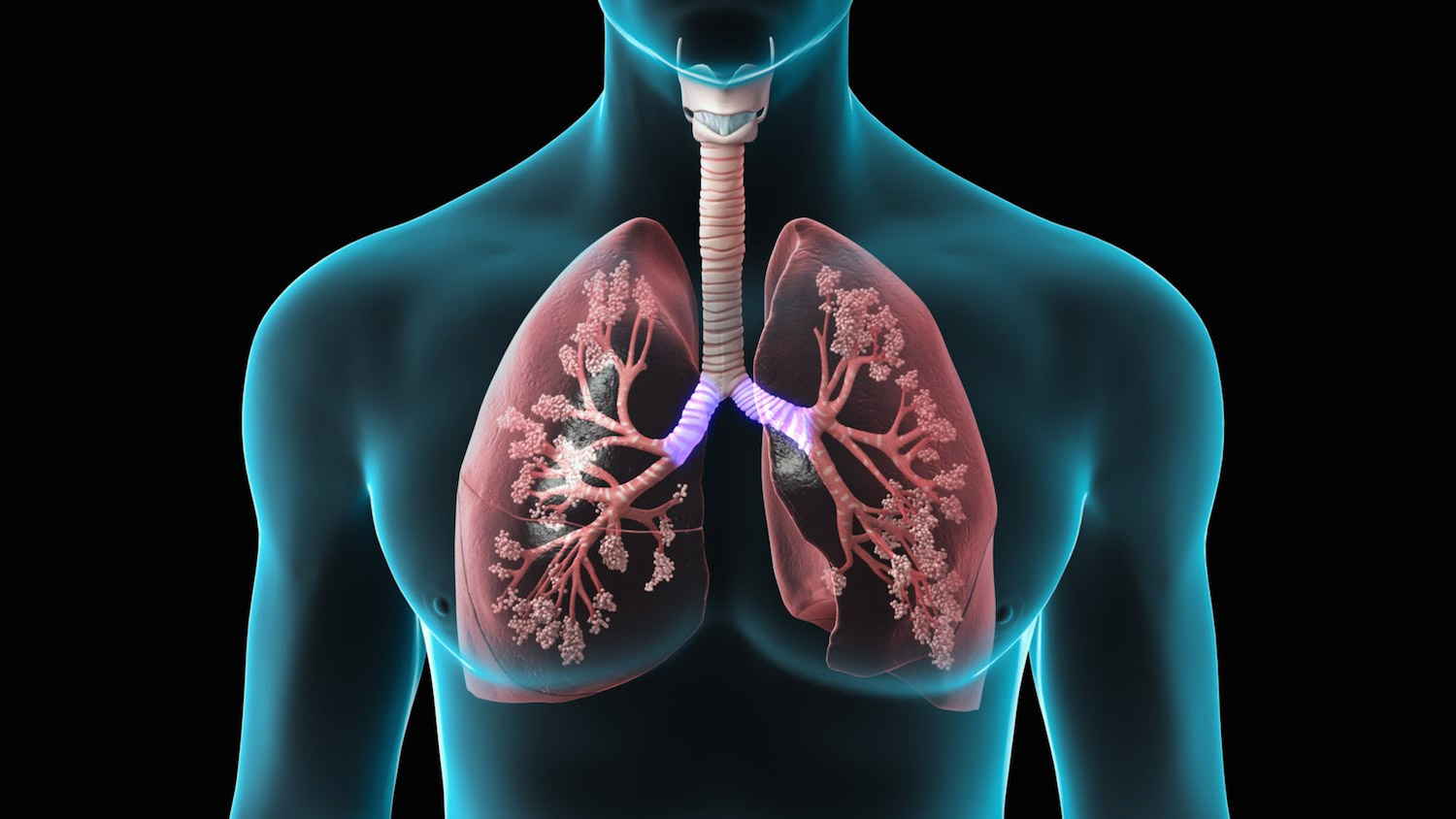 lungs (1)