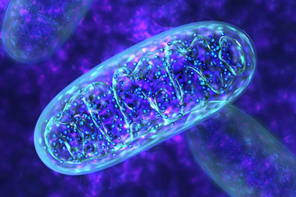 Mitochondria are present in all human cells except red blood cells